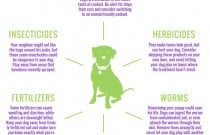 6 Common Summer Dangers for Dogs Infographic