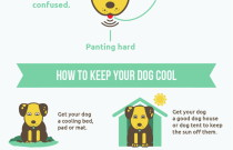 Dog Days of Summer Infographic