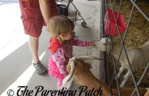 Poppy Meets the Chicken and Goats at Tanners Orchard