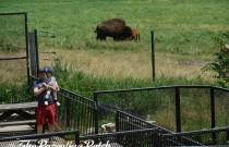 An Afternoon at Wildlife Prairie State Park: Wordless Wednesday