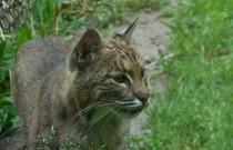 Animals of the Henson C. Robinson Children's Zoo: Wordless Wednesday