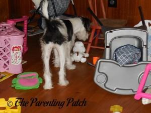 Kenobi Checking Out the Whistle & Go Puppy 2