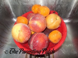 Washing the Peaches and Apricots