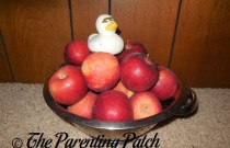 The Duck and the Apples: The Rubber Ducky Project Week 45