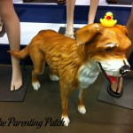 The Duck and the Old Navy Dog: The Rubber Ducky Project Week 48
