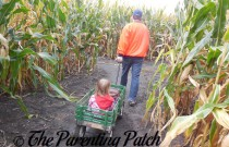 An Autumn Saturday at Rader Family Farms: Volume 4
