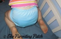 Blueberry Buttons Diaper: Daily Diaper