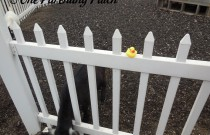 The Duck and the Goat: The Rubber Ducky Project Week 32