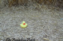 The Duck and the Straw: The Rubber Ducky Project Week 39