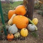 The Duck and the Pile of Pumpkins