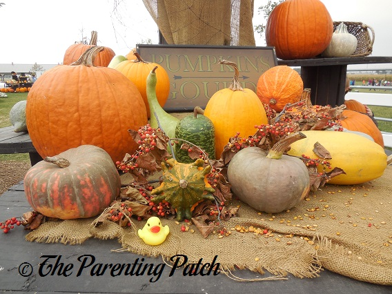 The Duck and the Pumpkins and Gourds