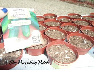 Planting Cucumber Seeds