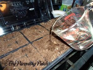Moistening the Starter Soil