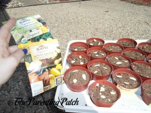 Winter Squash Seed Packets