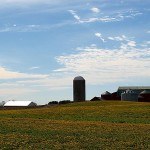 Dandelion Farms