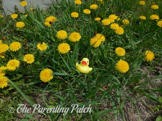 The Duck and the Dandelions