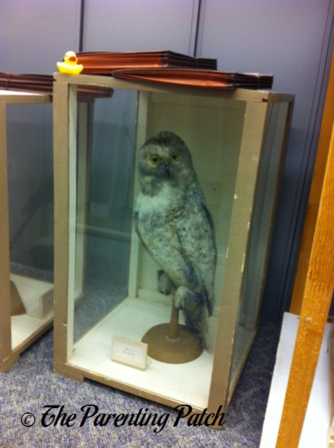 The Duck and the Taxidermy Snowy Owl