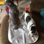 Espen and Kenobi Sitting on the Achy Paws Self-Warming Pet Mat