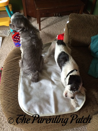 Espen and Kenobi Sitting on the Achy Paws Self-Warming Pet Mat