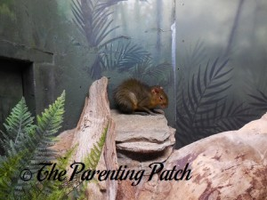 Rodent at the Bronx Zoo 1