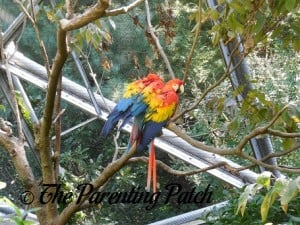 Macaws at the Queens Zoo 1
