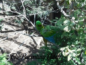 Macaws at the Queens Zoo 2