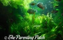 Family Fun in New York City: New York Aquarium