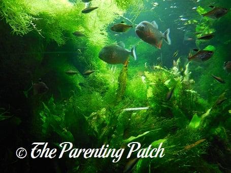 Fish at the New York Aquarium 6