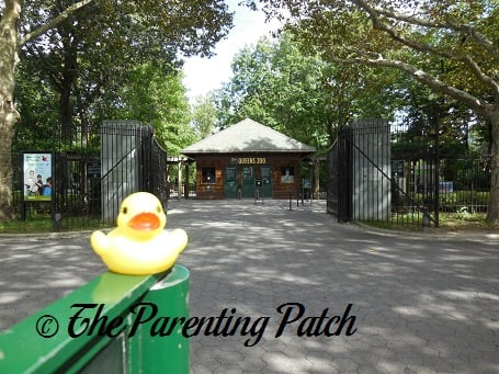 The Duck and the Queens Zoo