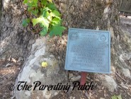 The Duck and the Historical Tree at Washington Irving's Sunnyside
