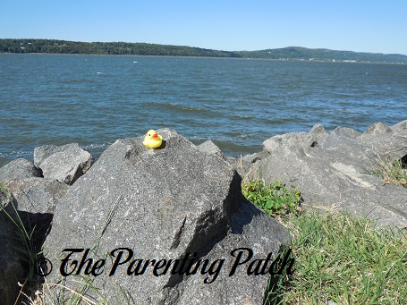 The Duck and the Hudson River