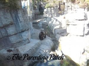Grizzly Bear at the Central Park Zoo 2