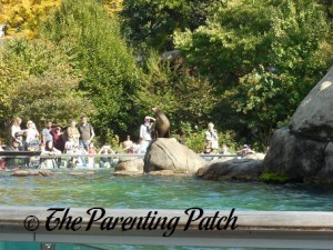 Sea Lion at the Central Park Zoo 1