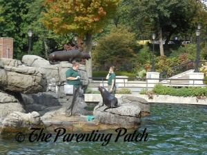 Sea Lion Feeding at Prospect Park Zoo 2