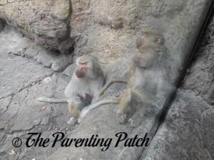 Baby Family at Prospect Park Zoo