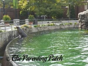 Sea Lion at Prospect Park Zoo