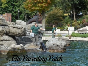 Sea Lion Feeding at Prospect Park Zoo 1