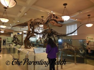 Saurischian Dinosaur Fossils at the American Museum of Natural History