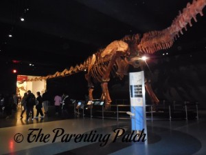 Titanosaur at the American Museum of Natural History