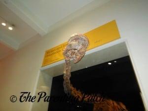 Titanosaur Head at the American Museum of Natural History