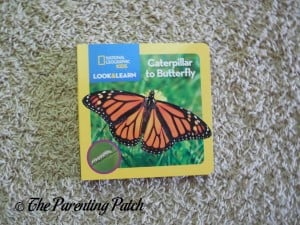National Geographic Kids Look and Learn: Caterpillar to Butterfly (Look & Learn) 1