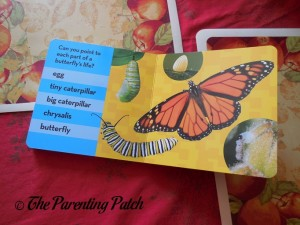 National Geographic Kids Look and Learn: Caterpillar to Butterfly (Look & Learn) 2