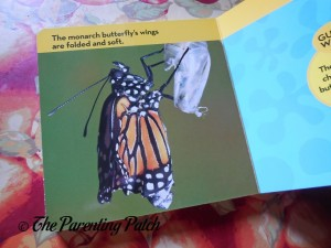 National Geographic Kids Look and Learn: Caterpillar to Butterfly (Look & Learn) 3