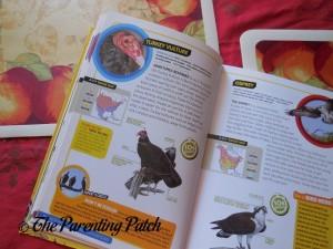 Ultimate Explorer Field Guide: Birds (National Geographic Kids Ultimate Explorers Field Guide) 3