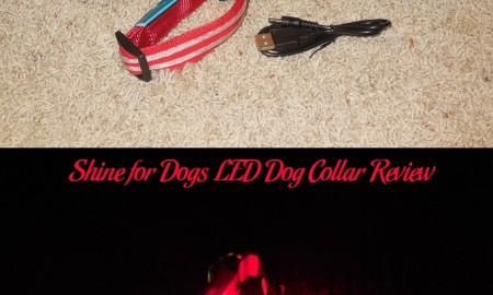 Shine for Dogs LED Dog Collar Review