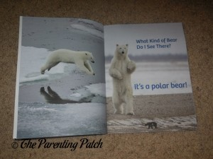 Inside Pages of A Kid's Guide to Polar Bears 2