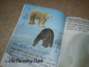 Inside Pages of A Kid's Guide to Polar Bears 3