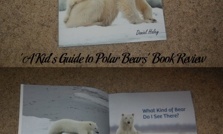 A Kid's Guide to Polar Bears Book Review