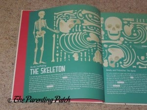 Skeleton in 'My Body: Explained and Illustrated'
