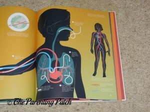 Lungs in 'My Body: Explained and Illustrated'